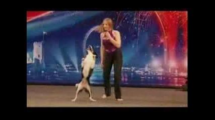 Невероятно Куче И Неговата Дресьорка Правят Голямо Шоу В Англия