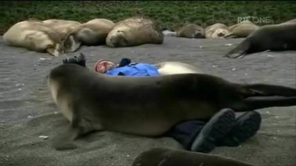 Тюлени прегръщат човек