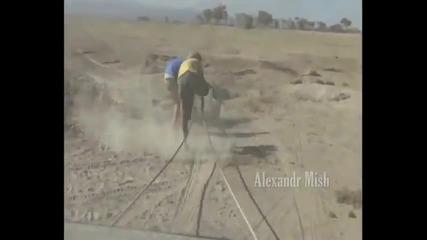 Хора помагат на животни в беда