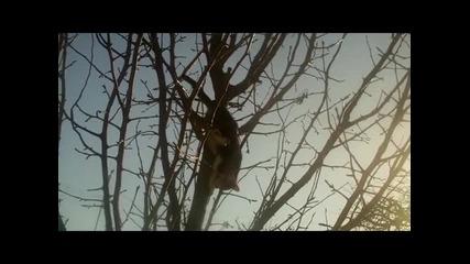 Палавата Роуз: На дървото