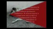 Съдбата На Бездомните Кучета В България