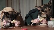 Кучета ядат и пият като хора