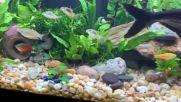 Уникален сборен аквариум - Истинска красота!