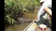 Огромна анаконда в реката
