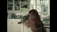 Кучето изяде сандвича , изпи пепсито и обвини котката !