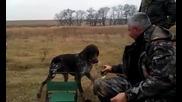 Руско ловно куче носи водка, перфектно обучен!