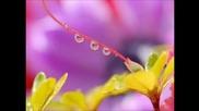 Mузика за теб и цветя за мен