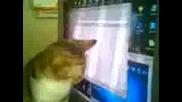 Коте си играе със стрелката на мишка