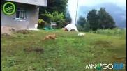 Котка тотално прецаква куче