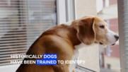 Тези кучета надушват COVID-19 почти на 100%