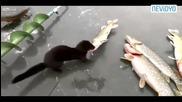 Сладко порче си краде рибка .
