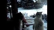 Побъркани котки се карат и бият