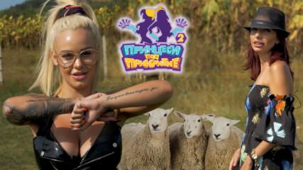Овчар кръщава овцете си на градски СЛАДУРАНИ
