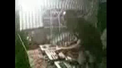 Ivexaaa - lokorsko