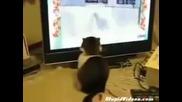 Най - страшната котка на света :)