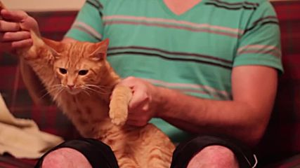 Професионален котешки Dubstep
