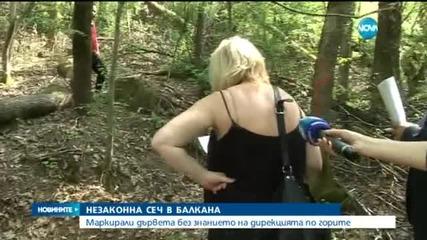 Незаконна сеч в Балкана