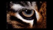 Survivor - Eye Of The Tiger (techno Remix)