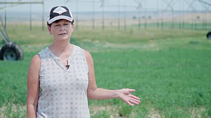 USA: Alfalfa fields destroyed by swarms of grasshoppers in Malheur County