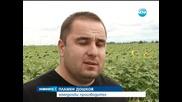 Свършиха ракетите срещу градушки, застрашена е реколтата - Новините на Нова