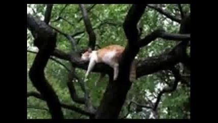 Снимки На Котки - Светът Е Хубав