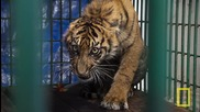 National Geographic Live! - Steve Winter & Alan Rabinowitz_ Tigers Forever
