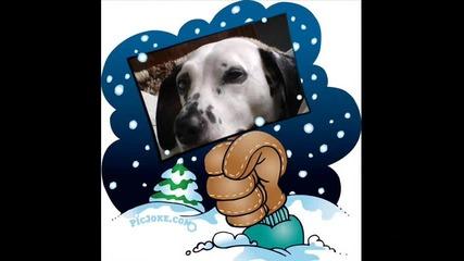 Нашите кучета