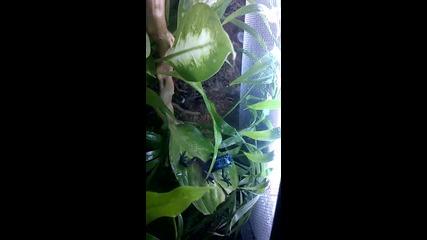 Моята отровна жаба дърволаз