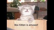 Смешни Котки - Funny Cats