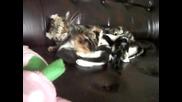От сладки по сладки котенца