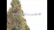 High Times Presents Top 10 Strains of the Year