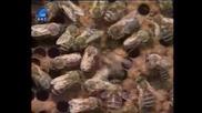Насаме с пчелите(bg Audio) 1 част