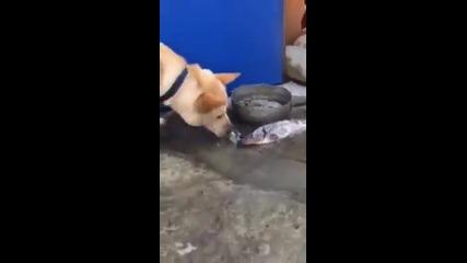 Куче Се Бори За Живота На Риби
