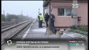 Поредна жертва на жп прелез – кой е виновен - Здравей, България (10.10.2014г.)