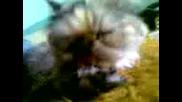 Моето Коте Сузи