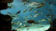 Super aquarium