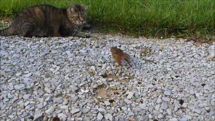 Котката си беше хванала малка катеричка за вечеря, а тя пък взе, че си поигра малко и си замина