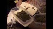 Smokin Marijuana Erday (MJ)