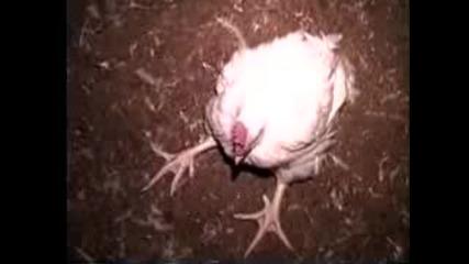 Памела Андерсън за насилието на животни от КФС