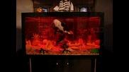 това е мераклийски аквариум