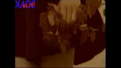 Радо Шишарката - Бели Птици И Куршуми