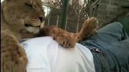 Лъвица се любува с мъж