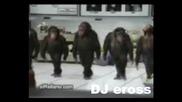 Орк.три Звезди - Кючека Маймунка