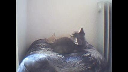 Моите Котенца