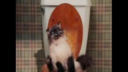 Котките! Най - Културните Животни