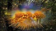 Капки роса по цветя - Oliver Shanti