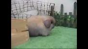 Смешно Пухкаво Зайче Прави Скокове