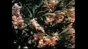 Shirley Bassey Summer Wind & Light My Fire