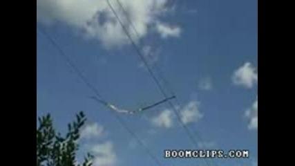 tree branch vs power lines