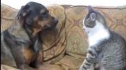 Много смях ! Много смела котка не остана длъжна на кучето